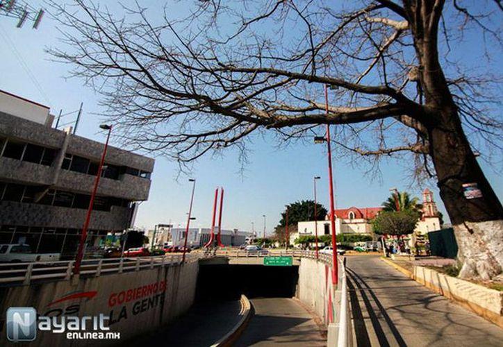 El longevo árbol se ubica en calzada de la Cruz. Se secó debido a que se construyó el nodo vial de esa zona, se cortaron sus raíces y no le dieron agua suficiente. (nayarit.enlinea.mx)