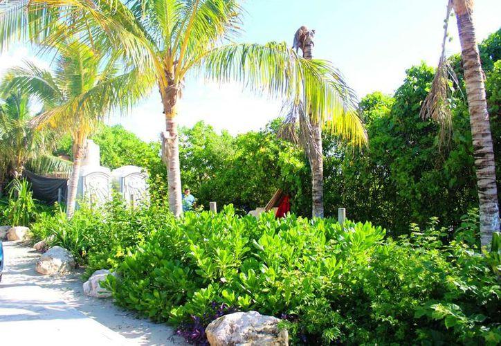 """Sería por parte de un concesionario que ubica un food truck y club de playa """"Cocoa Beach Club"""", a un costado del acceso a la zona de Punta Esmeralda.(Daniel Pacheco/SIPSE)"""