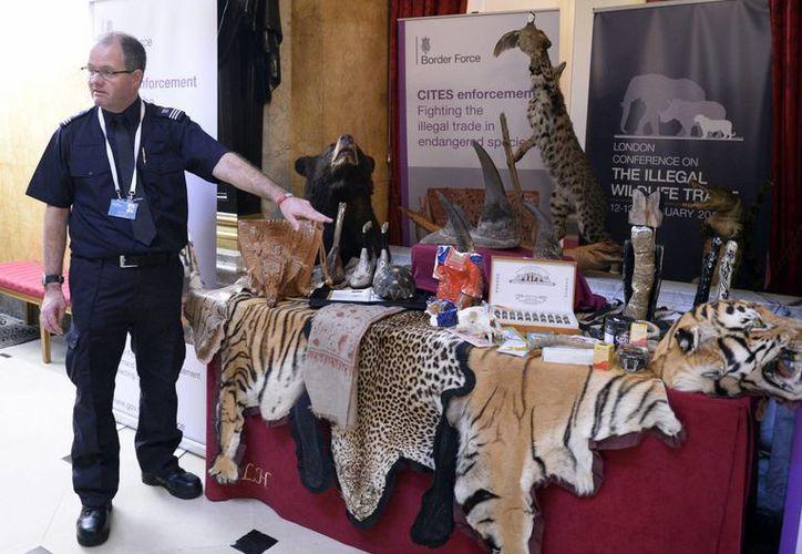 El agente de policía de aduanas del Aeropuerto de Heathrow Grant Miller muestra productos incautados durante la conferencia internacional sobre el mercado ilegal de animales salvajes. (EFE)