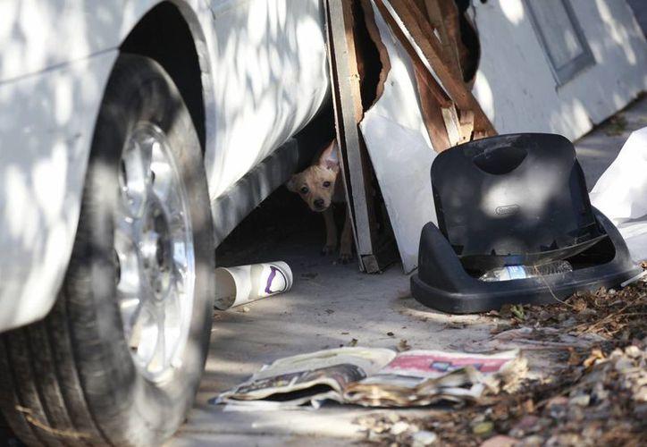 Las autoridades registran los escombros de la casa incendiada para ver si hay algún perrito sobreviviente escondido ahí. (AP)