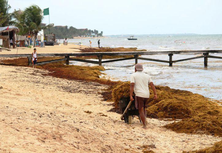Trabajadores del hotel fueron captados en flagrancia cuando enterraban el alga. (Octavio Martínez/SIPSE)
