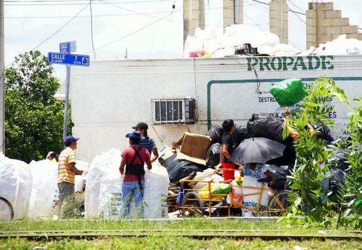Un reglamento municipal prohíbe la pepena de la basura. (José Acosta/SIPSE)