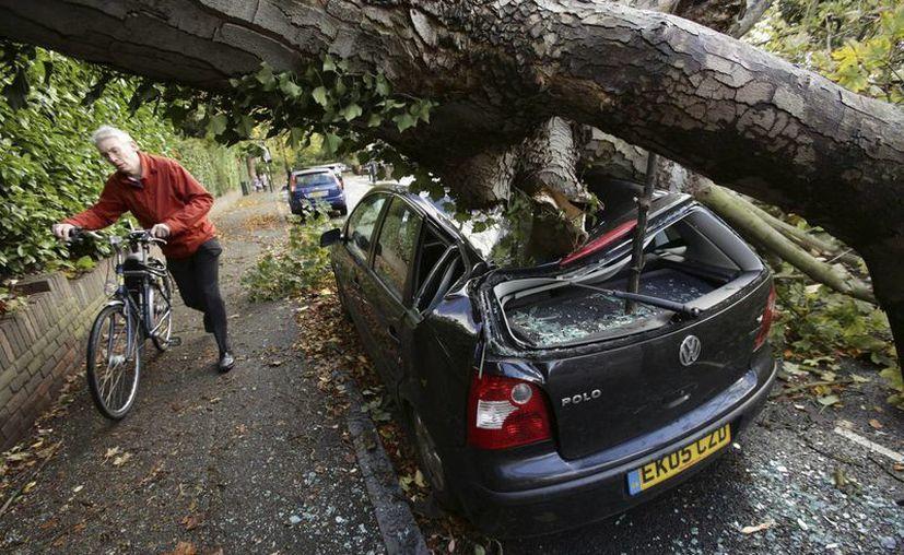 Un ciclista rodea un árbol que aplastó un auto en Hornsey, al norte de Inglaterra. (Agencias)