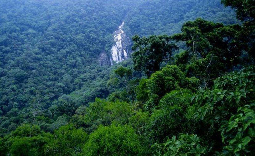 La minería ilegal afecta al menos 18 mil hectáreas del Amazonas. (Archivo/Agencias)