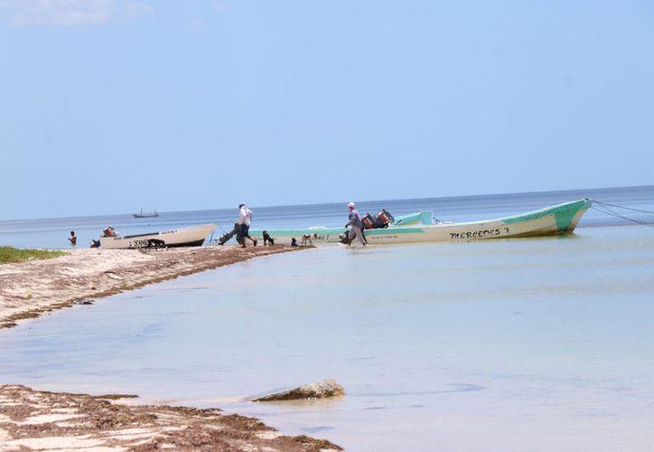 """En las costas yucatecas sí hay sargazo, pero con un volumen que los habitantes de la zona consideran """"normal"""". (Jorge Acosta/Novedades Yucatán)"""