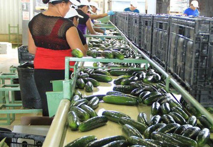 La empresa Icasa exporta alimentos no perecederos como vegetales. (SIPSE)