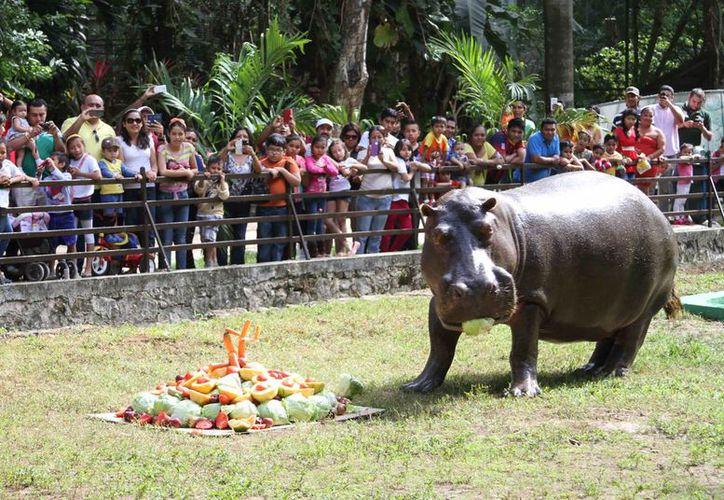 Las actividades pre-vacacionales iniciaron ayer con la fiesta al hipopótamo Andrés. (Harold Alcocer/SIPSE)