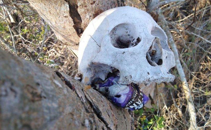 Se presume que pudo haber sido sacado de un cementerio. (Novedades Yucatán)