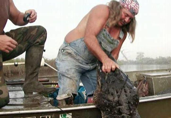 Según datos oficiales, la caza de cocodrilos ha incrementado un 400 por ciento en la última década. Un factor en este aumento sería la popularidad de programas de televisión como 'Swamp people' o 'Gator boys', que cuentan historias de cazadores de cocodrilos. (abcnews.go.com)
