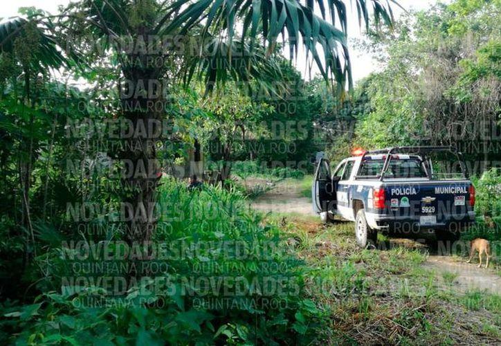 El hallazgo se realizó pasadas las 17 horas de este sábado y al lugar arribaron integrantes del Servicio Médico Forense (Semefo). (SIPSE)