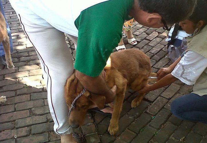 El sábado concluye la campaña de vacunación para perros y gatos. (Milenio Novedades)