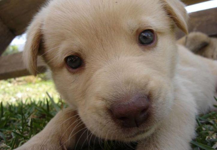 En caso de que ya en la casa haya otros animales, es importante que permitas que se conozcan. (Redacción/SIPSE)