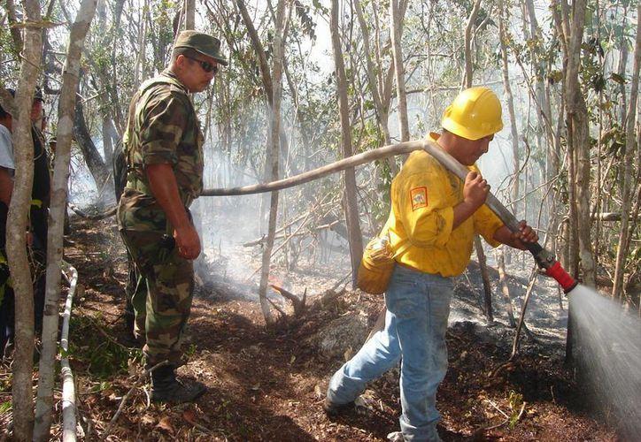 Los brigadistas de incendios forestales se encuentran bajo un constante riesgo durante las acciones de extinción de los siniestros, hasta el momento tienen adscritos a 140 personas. (Juan Palma/SIPSE)