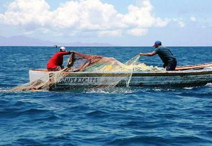 La asociación SOS recomienda a los pescadores a no limpiar peces cerca del mar, pues eso puede hacer que los tiburones toro se acerquen a la orilla. (Foto de contexto/Internet)
