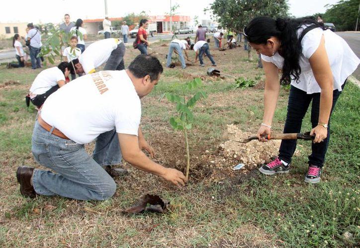 Legisladores proponen se conserve las áreas de árboles en la zona urbana. Imagen de dos personas en una actividad de reforestación. (Milenio Novedades)