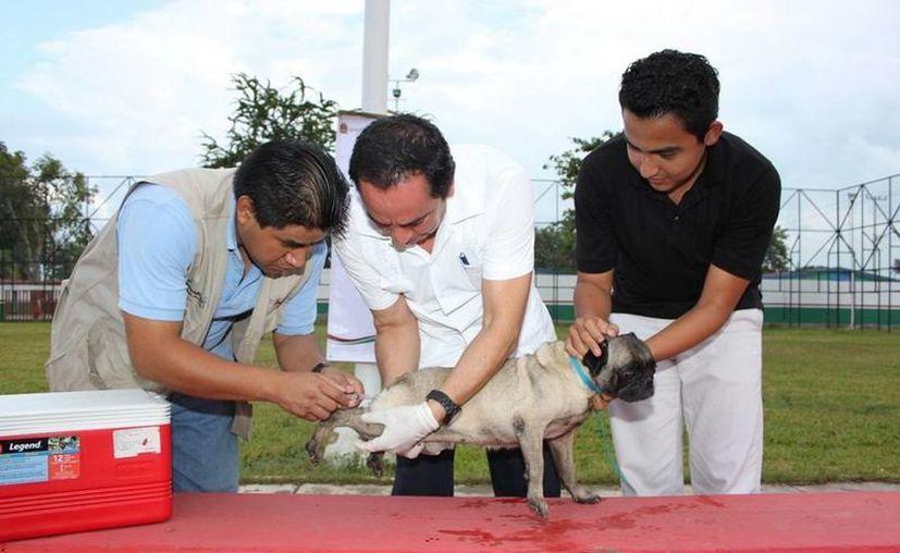 La campaña de vacunación antirrábica canina y felina es permanente, por lo que los propietarios de estas mascotas las pueden llevar a las oficinas de las jurisdicciones sanitarias. (Redacción/SIPSE)