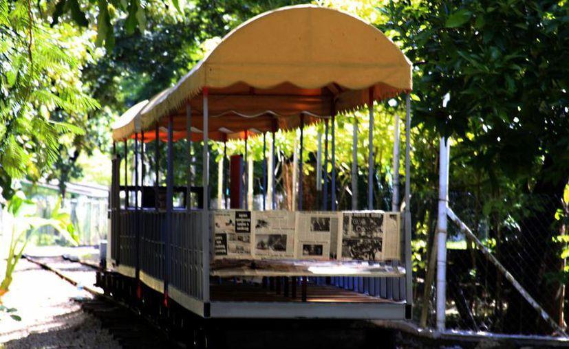 El nuevo director del zoológico adelantó que el tren está siendo rehabilitado. (Harold Alcocer/SIPSE)