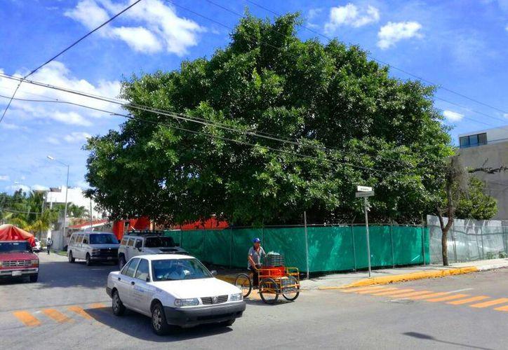 Mencionan que no es viable seguir derribando árboles. (Daniel Pacheco/SIPSE)