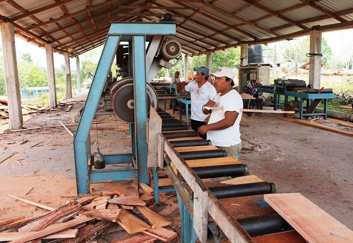 Quintana Roo es uno de los estados con gran producción y explotación de maderas preciosas como el cedro y la caoba. (Edgardo Rodríguez/SIPSE)