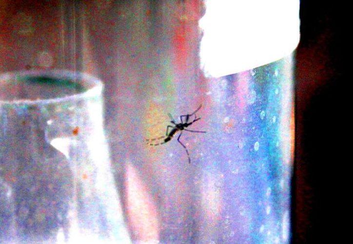 El paludismo es propagado por moscos. (Daniel Pacheco)