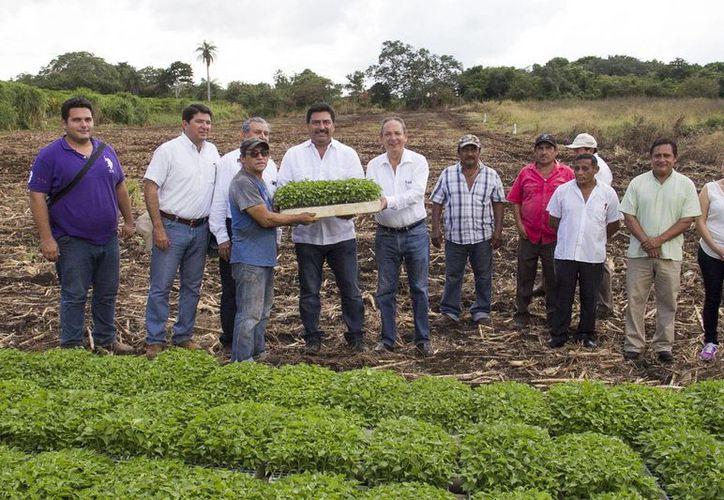 El titular de la Seder, Juan Canul, entregó este jueves 20 mil plántulas de chile habanero, variedad Mayapán, e insumos para la producción de hortalizas en el oriente de la entidad. (Foto cortesía)