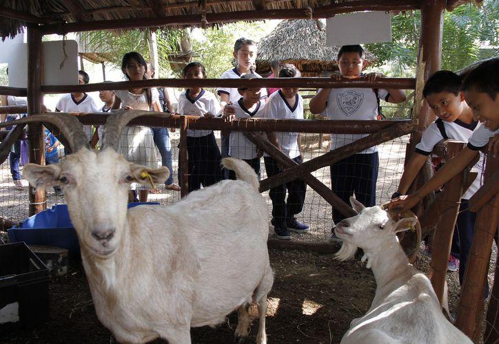 Participaron más de 340 ejemplares de 14 ganaderías de Yucatán y 3 provenientes de los estados de México, Veracruz y Jalisco. (Foto: cortesía)