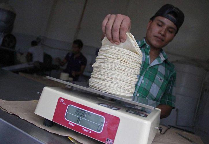 En el supermercado la tortilla se comercializa hasta en 10 pesos, mientras que en las tortillerías, por arriba de los 12 pesos. (Jesús Tijerina/SIPSE)