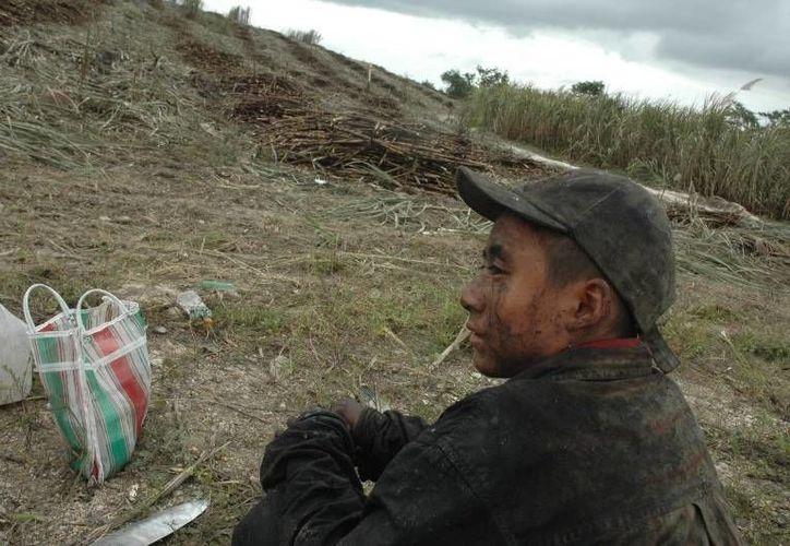 Organizaciones cañeras aseguran que desde hace varios años se dejó de emplear a menores en la zafra. (Edgardo Rodríguez/SIPSE)