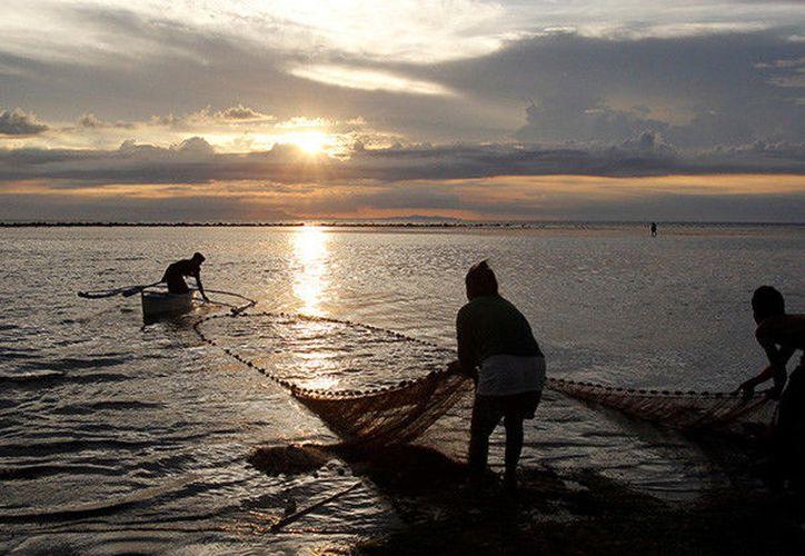 Tuvieron que llevar el cuerpo de la criatura hasta la orilla con la ayuda de un barco. (Foto: RT Noticias).
