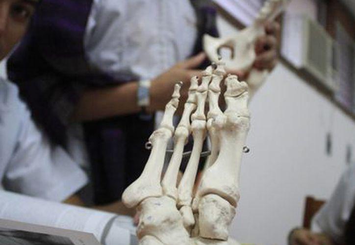 Cada año ingresan entre 14 y 20 estudiantes a la Licenciatura de Terapia Física.  (Harold Alcocer/SIPSE)