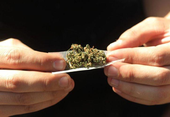 La marihuana suele estar disponible en el mercado negro en Croacia, con precios que alcanzan los 600 euros. Ahora esta droga será utilizada legalmente para el tratamiento de ciertas dolencias. (Archivo/EFE)