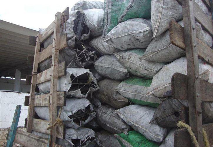 Los ejidatarios productores entre otros productos de carbón se sienten acosados y perseguidos por la Profepa. (Archivo/SIPSE)