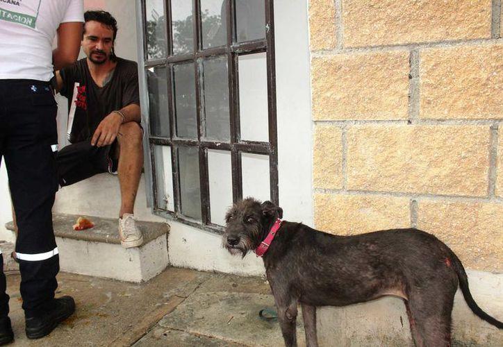 Tanto el dueño como la mascota fueron heridos por el pitbull. (Redacción/SIPSE)