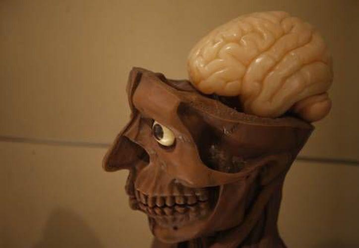 Es un mito que el ser humano sólo utilice el 10% del cerebro, afirma experto (La Jornada)