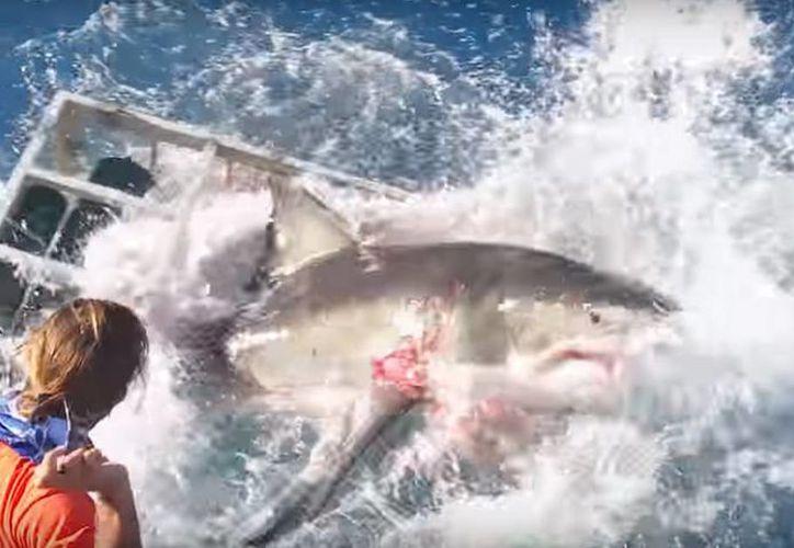 Un gran tiburón blanco se metió a una jaula con un buzo adentro, afortunadamente el hombre la libró y salió sin ningún rasguño. (Captura de pantalla/YouTube)