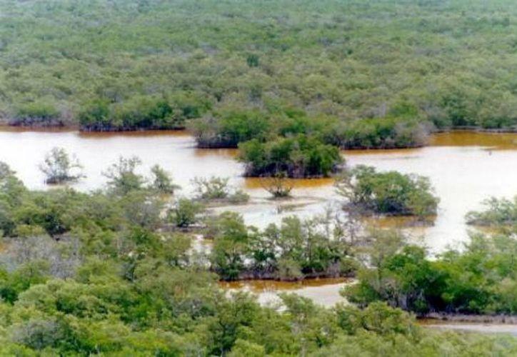 La zona de humedales interconecta sistemas terrestres y acuáticos. (Milenio Novedades)