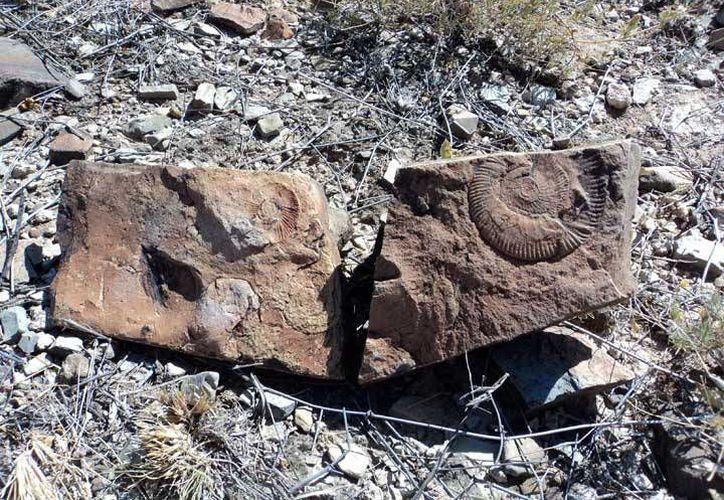 Los restos fosilizados fueron localizados durante trabajos de prospección arqueológica para la construcción de un gasoducto. (inah.gob.mx)