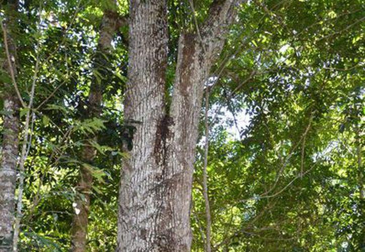 Quintana Roo es uno de los estados con mayor cobertura vegetal. (Contexto/Internet)