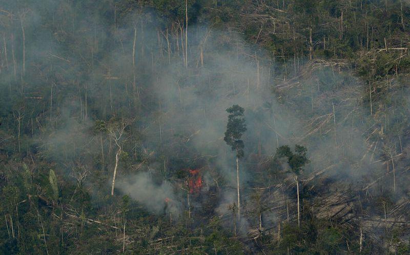 Fundación apoyada por DiCaprio recauda donativos para Amazonía