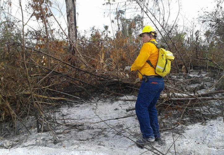 En abril, están prohibidas las quemas agrícolas, a fin de evitar incendios forestales. (Archivo/SIPSE)