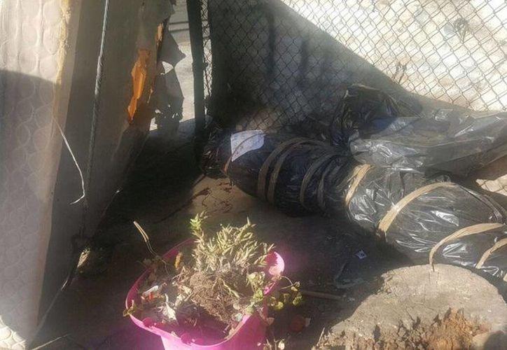 Podría no sorprender a la gente el hallazgo de un cadáver embolsado, pero en esta ocasión se trataba de un pino navideño. (Twitter.com/@SSP_CDMX)