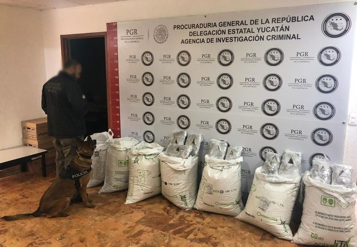 El producto fue remitido a las instalaciones de la delegación de la PGR. (Milenio Novedades)