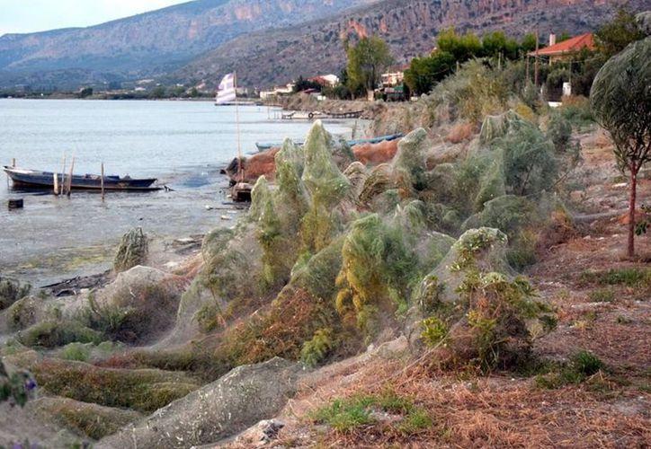 La vegetación cubre la orilla de una playa del pueblo en Aitoliko. (Internet)
