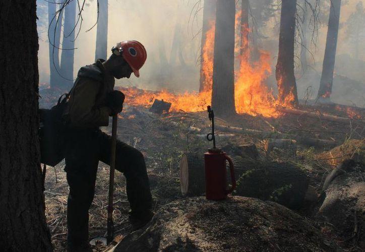El fuego podría continuar hasta el 20 de septiembre, según cálculos de autoridades forestales. (Notimex)