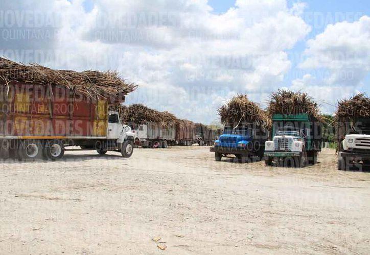 En la zafra 2017-2018, se tuvo una cosecha de más de un millón 600 mil toneladas. (Carlos Castillo/SIPSE)