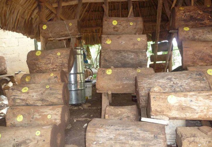 Jobones son como troncos huecos donde las abejas construyen sus colmenas. (Javier Ortiz/SIPSE)