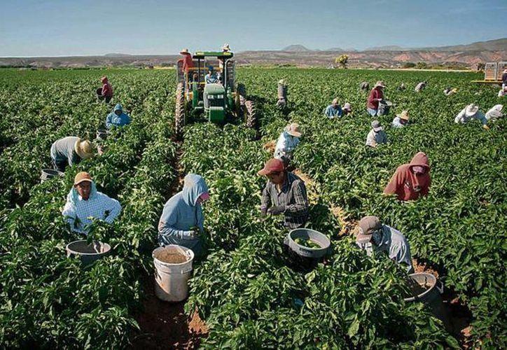 La Secretaría de Gobernación (Segob) deberá devolver a una docena de campesinos mexicanos el 10 por ciento de su trabajo, cantidad que les retuvo en el Programa Bracero. (lapolaka.com)