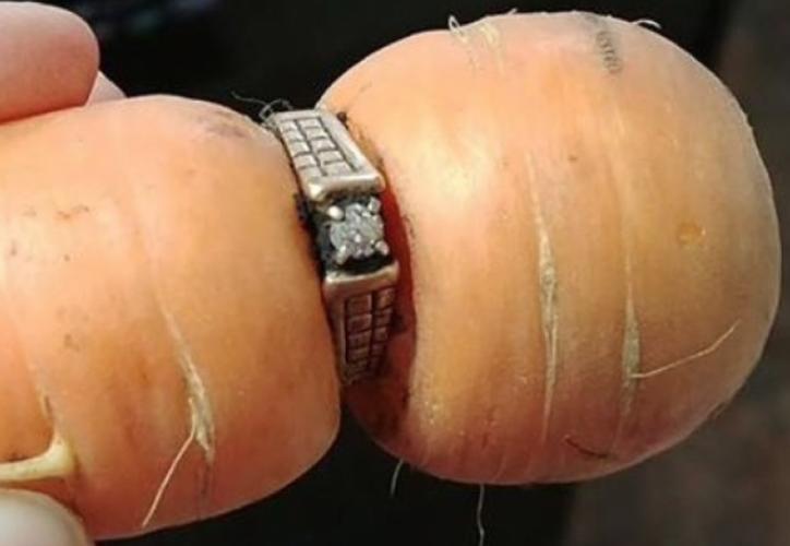 Su nuera Colleen Daley encontró el anillo cuando cosechaba zanahorias para la cena en la granja.  (Foto: Contexto/Internet)