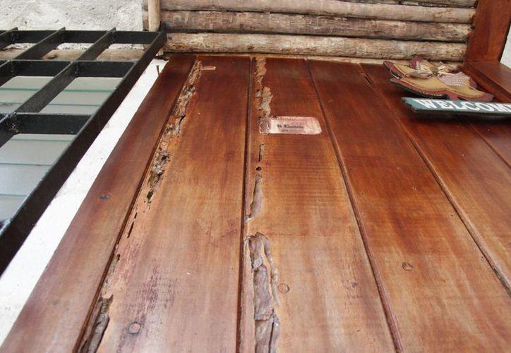 La plaga destruye muebles y puertas de madera. (Consuelo Javier/SIPSE)