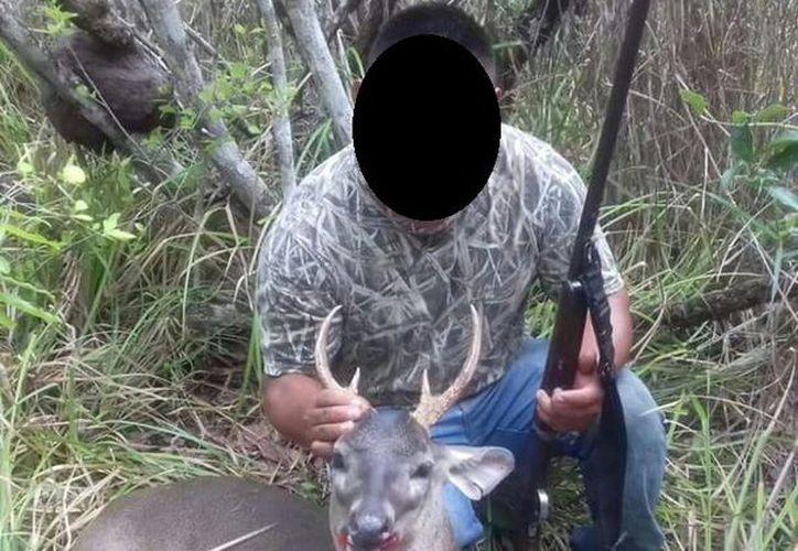 Tres especies cazan más en la región para vender la carne son: venado, jabalí y tepezcuintle. (Foto: Javier Ortiz / SIPSE)